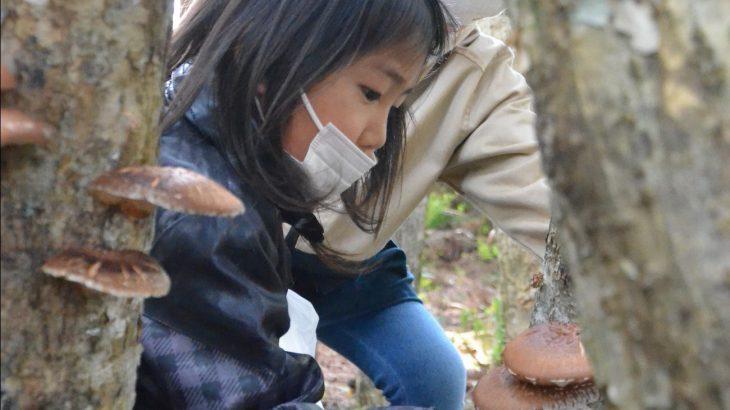 みどりの日に森林で収穫体験 鹿角市