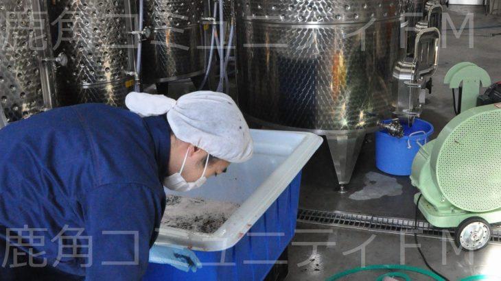 ことし産のブドウでワインの仕込み 小坂町